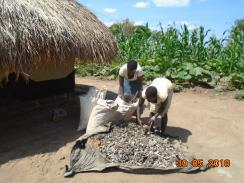 A household in Waju 3 spreading cassava peelings for dyring for briquette making