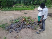 Environment Assistant assessing state of seedlings at the district nursery of Atu river