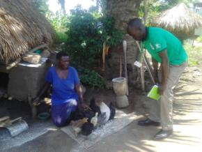 Livelihood assistant monitoring chicken in Waju 2 in a PSNs home.