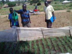 Community based extension worker inspecting nursery management in Adologo village.